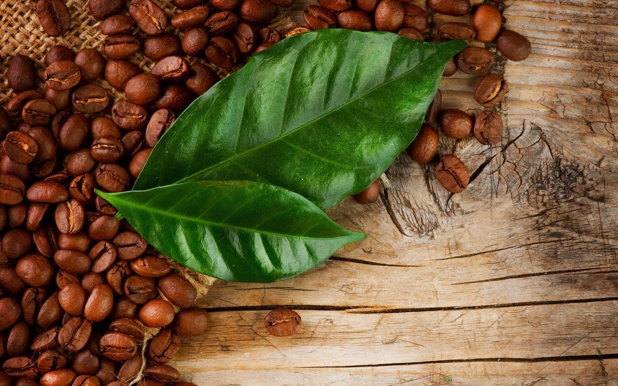 Как сделать зеленый кофе