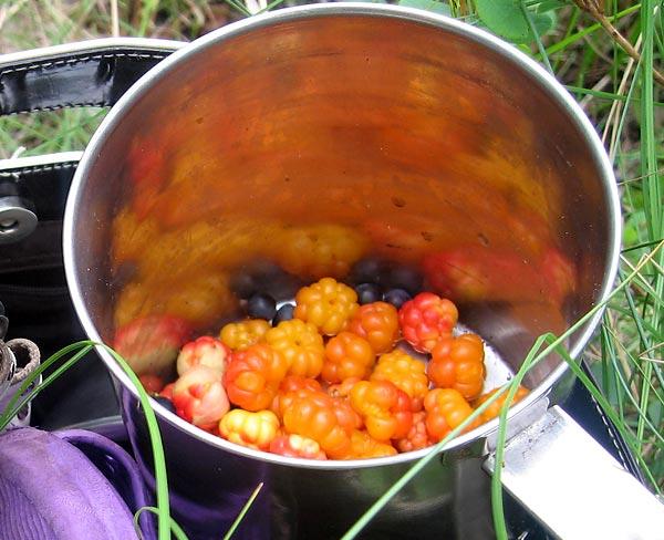 Морошка ягода - Полезные свойства морошки