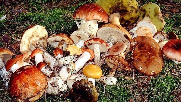 Немного о грибах
